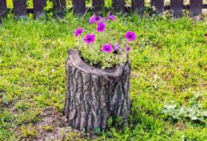 Baumstumpf als Blumenkuebel