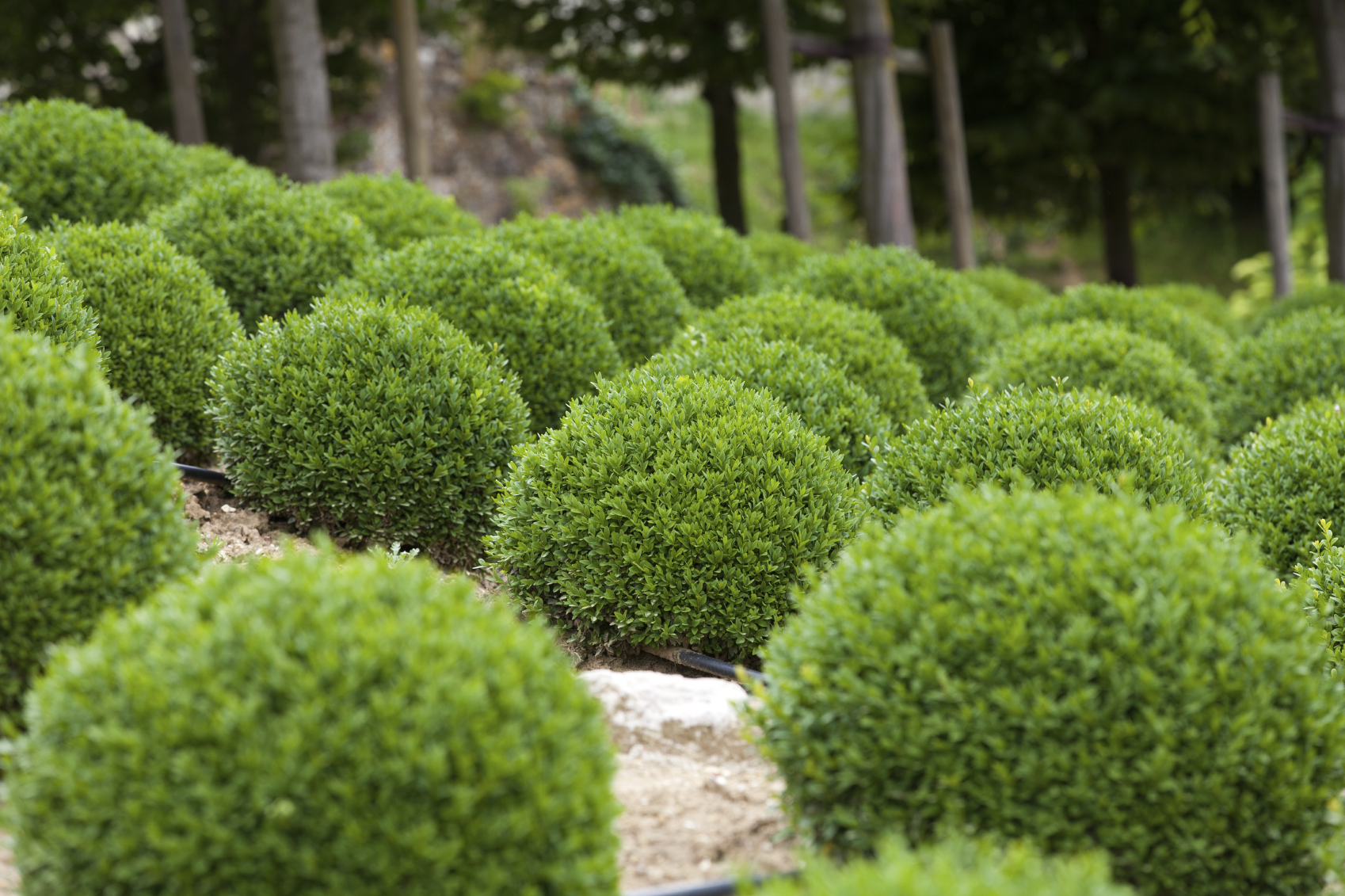 Sichtschutz Pflanzen grüne Wand gartenbau