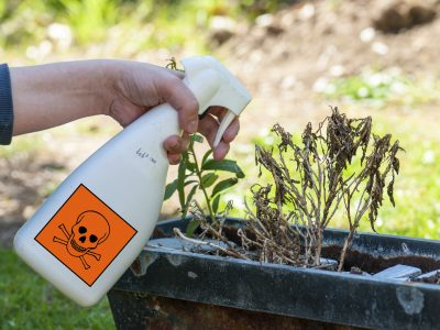 Garten ohne Pestizide