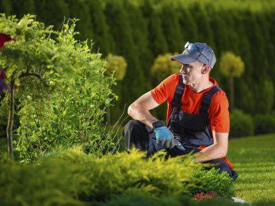 Gartenbau vom Profi