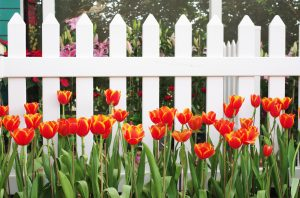 Gartenkalender April: Tulpen düngen