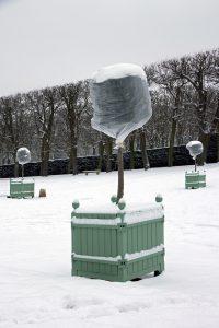 Gartenkalender Februar: Frostschutz