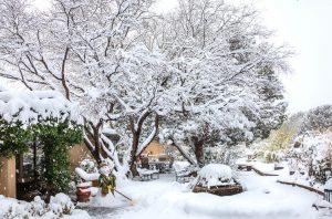 Gartenkalender Januar: Schneelast beseitigen