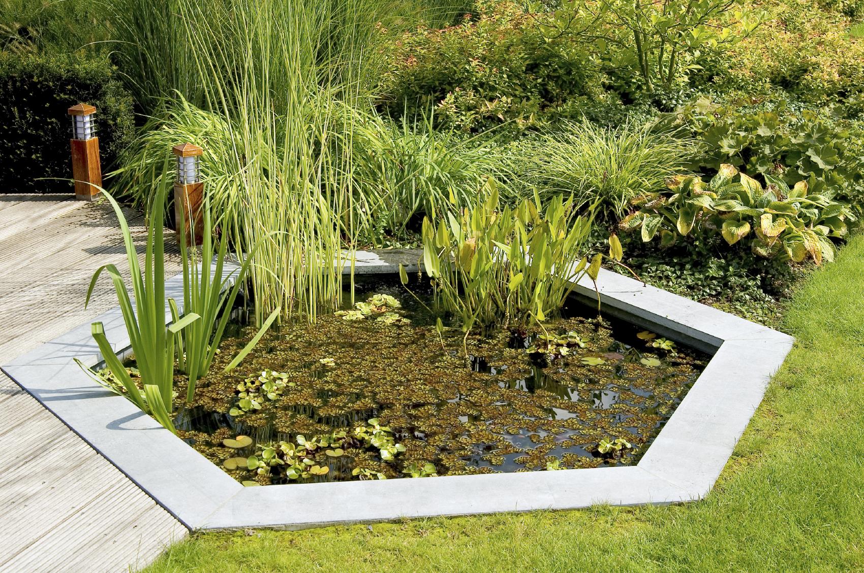 Elegant Gartenteich Biotop