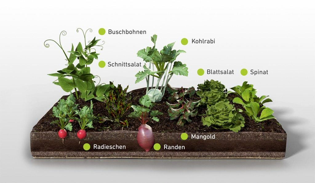 Wie legt man einen Nutzgarten an? | Gemüsebeet Beispiele