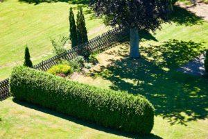 Sichtschutz Hecke im Garten