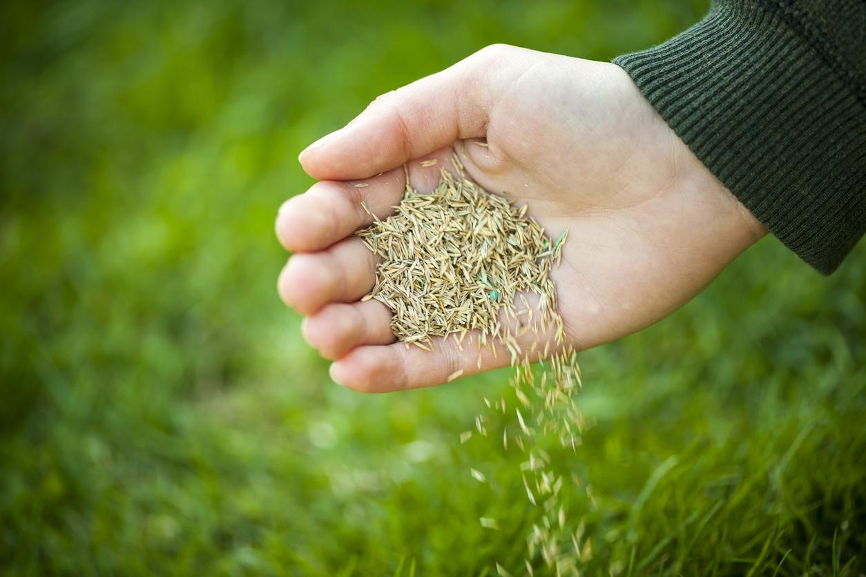 Wann Rasen Saen Das Ist Der Richtige Zeitpunkt 11880 Gartenbau Com