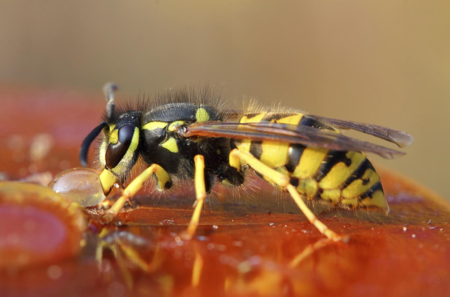 Insekten Im Garten Bekampfen