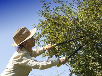 Zweige schneiden