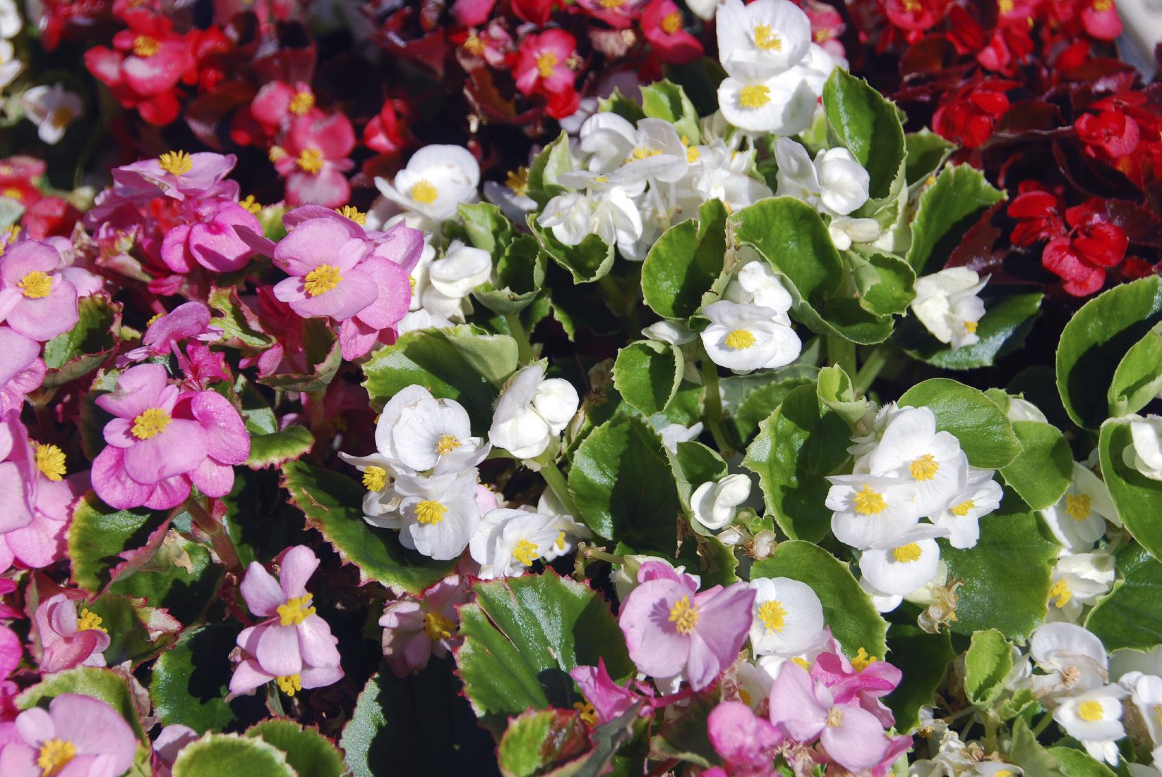 pflanzen auf balkon & terrasse » 11880-gartenbau.com - Schone Balkon Und Terrasse Gestaltung Akzente
