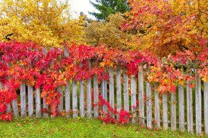 garten-im-oktober