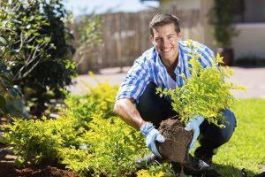 Umpflanzen im Garten