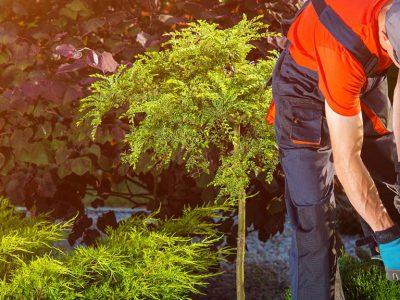 Gartenbau Preise vergleichen