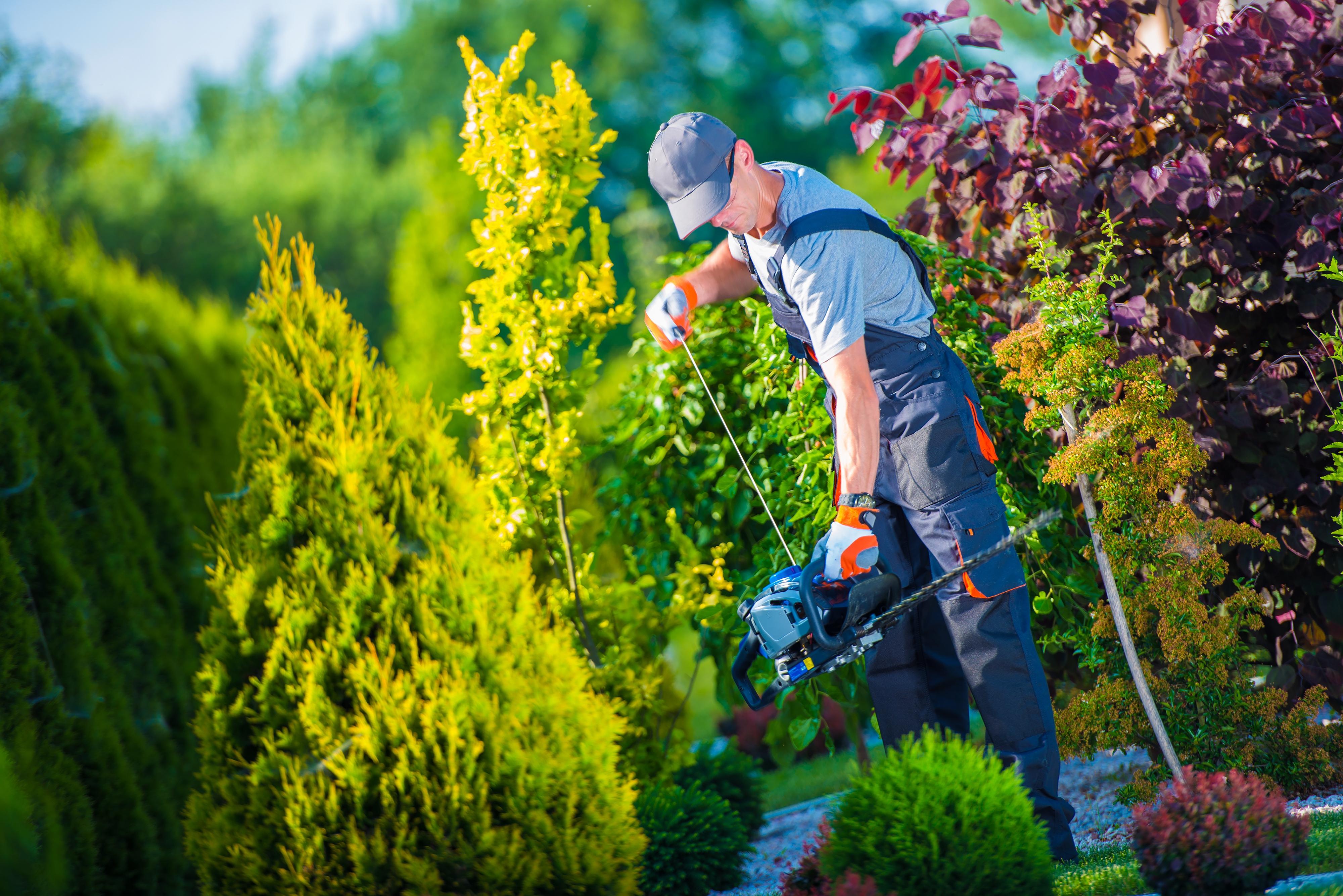 Gartenbau Wolfsburg gartenbau preisvergleich jpg