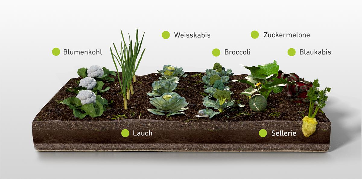 Anspruchsvolle Gemüsesorten im Gemüseanbau