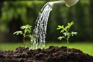 Herbst oder Frühjahr - wann einpflanzen