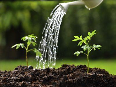 Wässern und gießen will gelernt sein